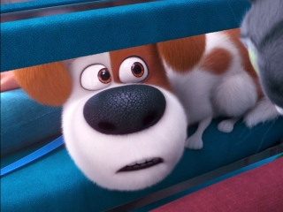 The Secret Life Of Pets 2: Max Meets Some Pets In The Vet Waiting Room