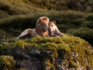 The Lion King: Can You Feel The Love Tonight? (Spot)