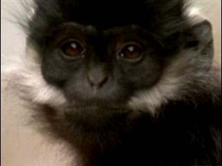 Wild China: One Of The World's Rarest Primates