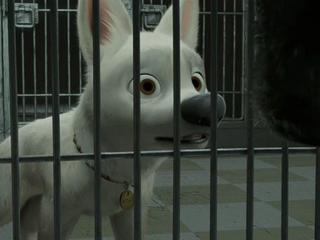Bolt: Animal Rescue (Extended Clip)