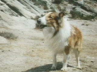 Lassie: The Miracle