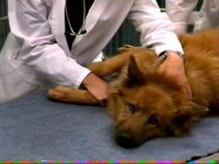 Nova: Animal Hospital