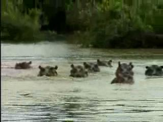 The Jeff Corwin Experience: Out On A Limb Scene: Hippos And Crocodiles