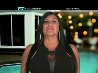 Miami Monkey: Monkey Business