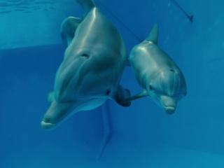Dolphin Tale 2 (Trailer 1)