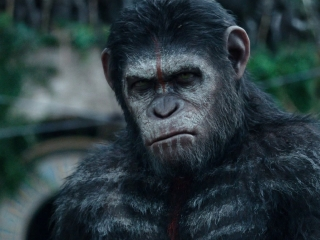 Dawn Of The Planet Of The Apes: Apes Don't Want War