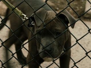 The Drop: Rocco The Dog (Featurette)